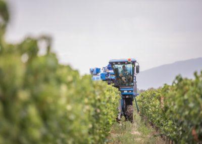 Viljoensdrift Harvest 17-1 (Large)